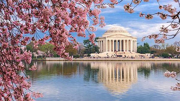 DC-Cherry-Blossom1
